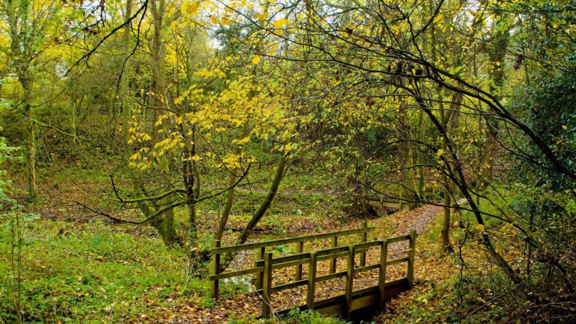 Autumn_Landscape_Slider_Image